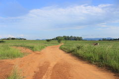 Dirt road leading through the savanna in Mlilwane, Swaziland, Africa, Safari Stock Photos