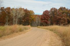 Dirt Road Leading Through Woods Stock Photography