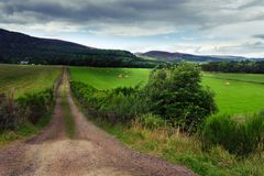 Dirt Road Leading to Farm House in Field royalty free stock image