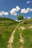 Dirt road leading to a tree stock photo