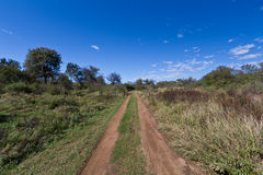 Dirt road leading into the unknown wilderness. A dirt track into the wilderness of Africa, under clear blue skies royalty free stock photography