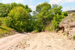 Dirt road leading through the woods Stock Photography