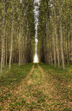 Dirt road leads through trees. Royalty Free Stock Photography