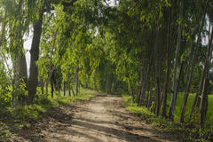 Dirt road and light from sunshine Royalty Free Stock Image