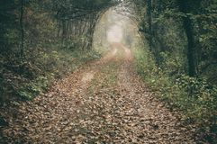 Dirt road in the magic and foggy morning beech forest Stock Photo