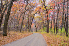 Dirt road, maple forest, autumn Stock Photography