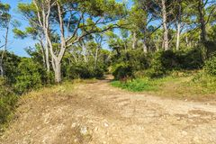 Way in a Mediterranean forest in Costa Brava, Catalonia, Spain. Dirt road in a Mediterranean forest in Costa Brava, Catalonia, Spain Stock Photography