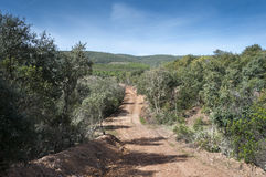 Dirt road in Mediterranean shrublands Royalty Free Stock Image