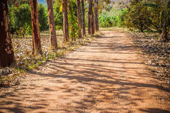 Dirt road in the middle of khao yai forest Royalty Free Stock Photography