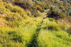 Dirt Road on Mountain. Disused dirt road on Greek mountain,  green, yellow and brown vegetation Stock Images