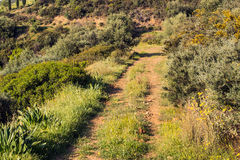 Dirt Road on Mountain Stock Photos