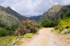 Dirt road in the mountains, Crete, Greece Royalty Free Stock Photography