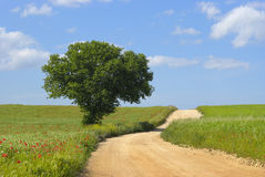 Dirt road on the Murgia - Apulia Stock Photos