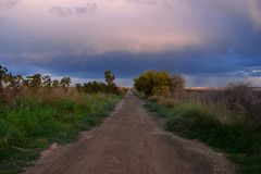 Path,storm,Cloudy skies, loneliness,plants, palms,blue,dirt road Stock Photography