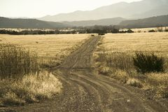 Dirt road through New Mexico countryside with back-lit dry grass Royalty Free Stock Images