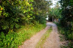 Dirt road next to green trees and vegetation. Wooden fence on the other side. Dirt road next to green trees and vegetation. Wooden fence on the other side royalty free stock photo