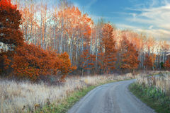 Dirt road and oak trees in autumn Stock Photography