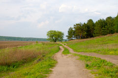 Dirt road and the old oak tree Stock Photography