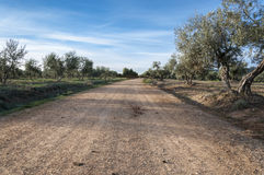 Dirt road between olive groves Stock Photo