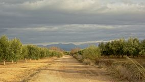 Dirt road in between olive orchards in  Sierra Nevada mountains under a cloudy evening sky,. Andalusia, Spain Stock Image