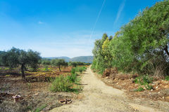 Dirt road in a olive tree grove in Porto Conte Royalty Free Stock Photography