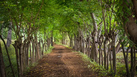 Dirt road with overgrown trees. At the island gili meno, indonesia Stock Photo