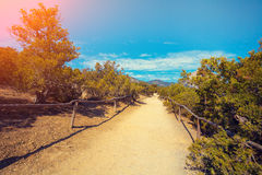 Dirt road in the park Royalty Free Stock Photo