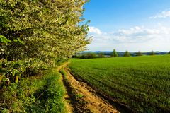 Dirt road. Path in the green field, agricultural landscape in spring Royalty Free Stock Photo