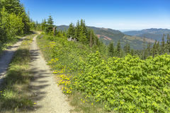 A dirt road path meanders along a mountain meadow on a sunny day. Hiking and traveling views near Mount Rainier in Washington over the summer Stock Photography