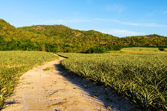 dirt road path near green field Stock Image