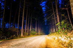 Dirt road through a pine forest at night, near Hanover, Pennsylv Stock Image
