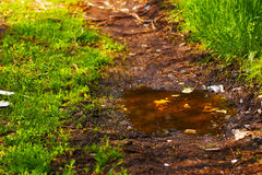 Dirt road with puddles through the forest. Background Royalty Free Stock Photography