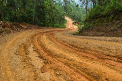 Dirt Road. Rain Forest With A Dirt Road Royalty Free Stock Photography