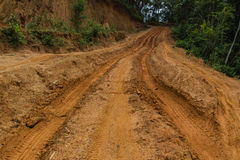 Dirt Road. Rain Forest With A Dirt Road Stock Images