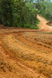 Dirt Road. Rain Forest With A Dirt Road Stock Photography