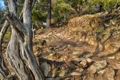 Dirt road and rocks with warm tone. Dry wood trunk in front view. Beautiful summer view. Tepozteco. Tepozteco hill. Archaeological site located in the Mexican royalty free stock photo