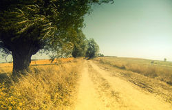 Dirt road in rural Poland Stock Image