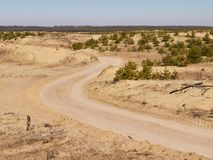 Dirt road between sand hills and remains of fir-tree nursery. Dirt road between sand hills with remains of small spruces with forest on the background Royalty Free Stock Image