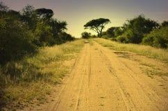 Dirt road through savannah at dawn. Dirt road through savannah and thorn tree in the distance Stock Photography