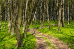 Dirt road in the shadow of the forest. Green grass and vegetation in April stock photos