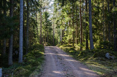 Dirt road through a shiny forest Stock Photo