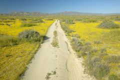Dirt road through the spring flowers Stock Photo