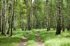 A dirt road in the spring forest Stock Photos