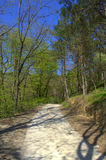 Dirt road in spring forest Stock Photos