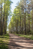 Dirt road in spring forest Royalty Free Stock Photos