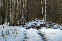 Dirt road in the spring forest with thawed patches. Half-melted dirt road in the spring forest with thawed patches Stock Photos
