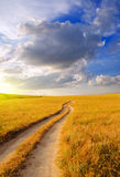 Dirt road in the steppe Stock Photos