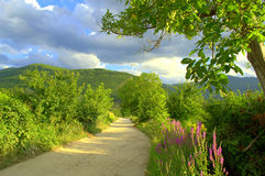 Dirt road in summer field Stock Photography