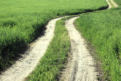 Dirt road in summer field among green grass, rural landscape Royalty Free Stock Images