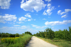 Dirt road in summer field Stock Images